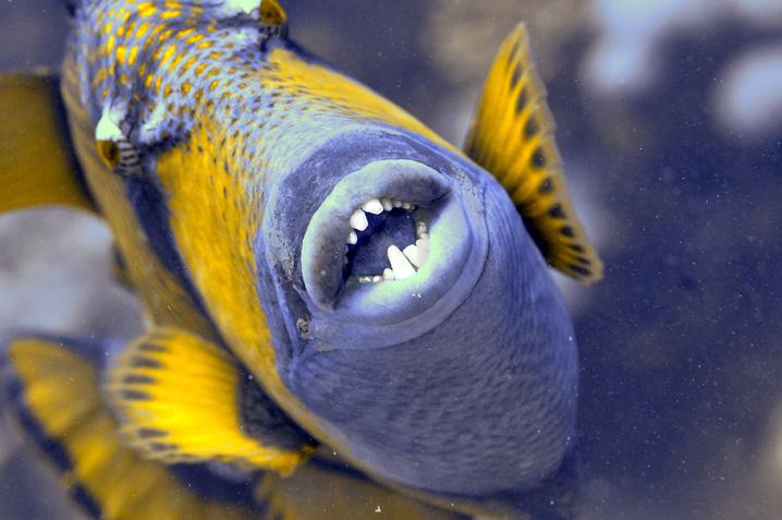 Un sacco di pesce cattivo dating