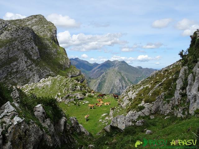 Ruta al Pierzu desde Priesca: Grupo de ganado