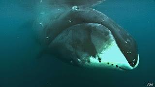 Top 7 des animaux marins les plus vieux au monde
