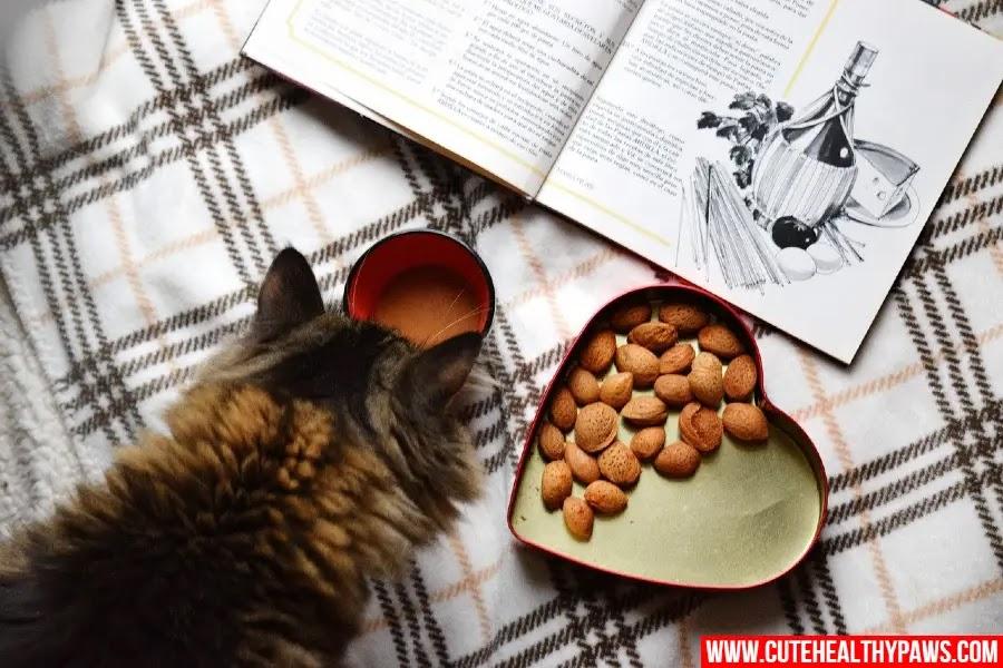 healthy cats treats and snacks