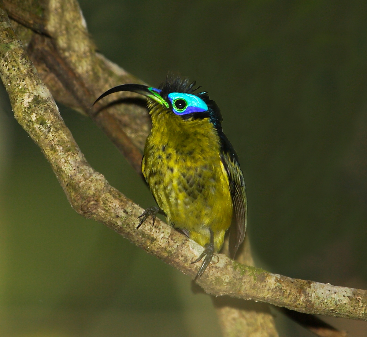 Birds Sunbird: Worldwide Birding Adventures: Introducing The