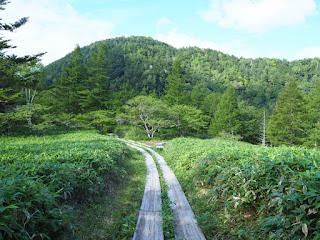 山王峠付近の木道