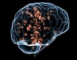 نشاط الدماغ ودوره في شيخوخة الإنسان وطول العمر