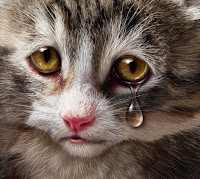Sad Valentine Cat | by focalsource | photodune