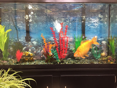 How many goldfish in a 20 gallon tank?
