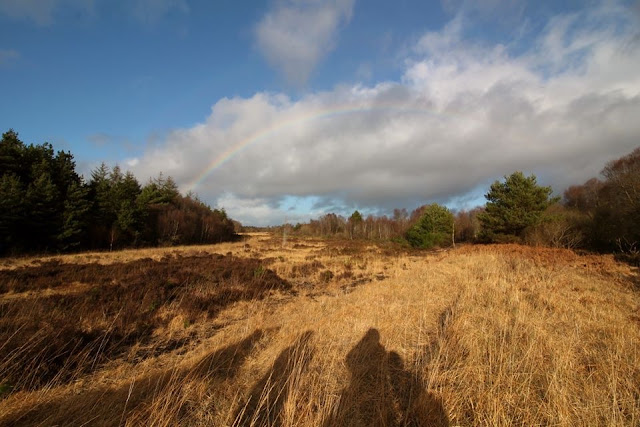 Rainbow Rathangan Peatlands