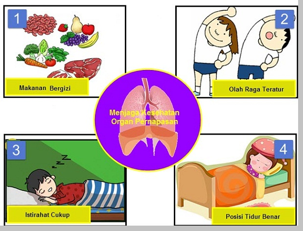 Cara menjaga kesehatan organ pernapasan - berbagaireviews.com