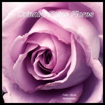 rosa cor de rosa