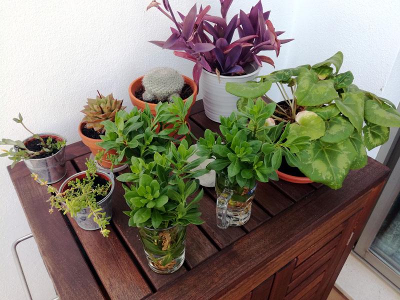 Alcune delle mie piante, 3 settembre 2019