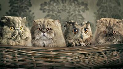 Gatos y búhos