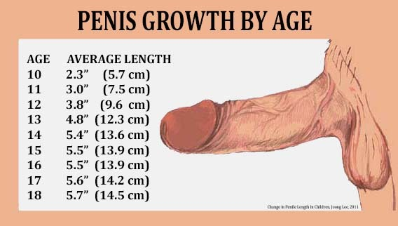 Penis size guide