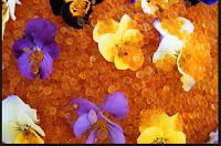 aplikasi silica gel bunga kering