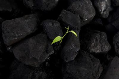 Dimana untuk donasi Anda uang ini Giving Selasa untuk offset Carbon Footprint Anda