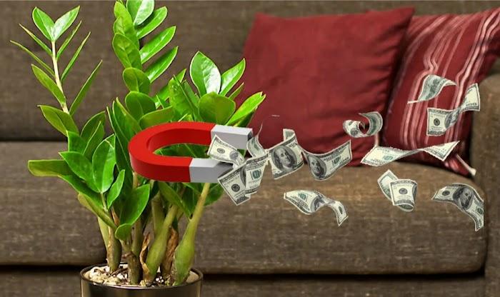 Цветы в доме - к деньгам. Как вырастить доход?