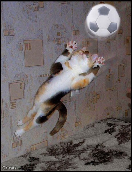 Photoshopped Cat GIF • Purrfect goal keeper catching the ball! He's ready for the cat UEFA Champions League!
