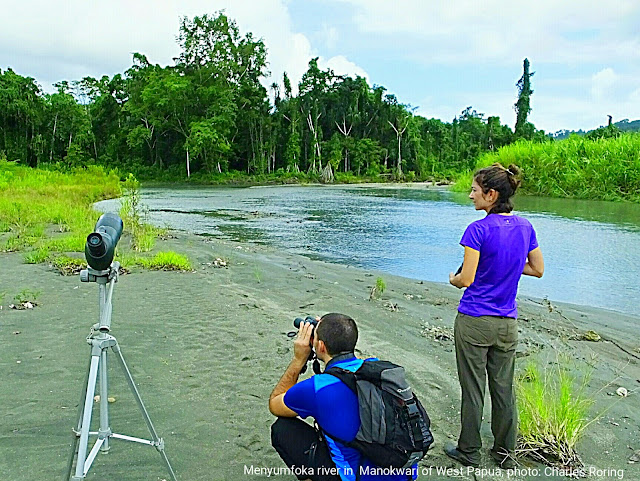 French tourists were birding in Manokwari forest