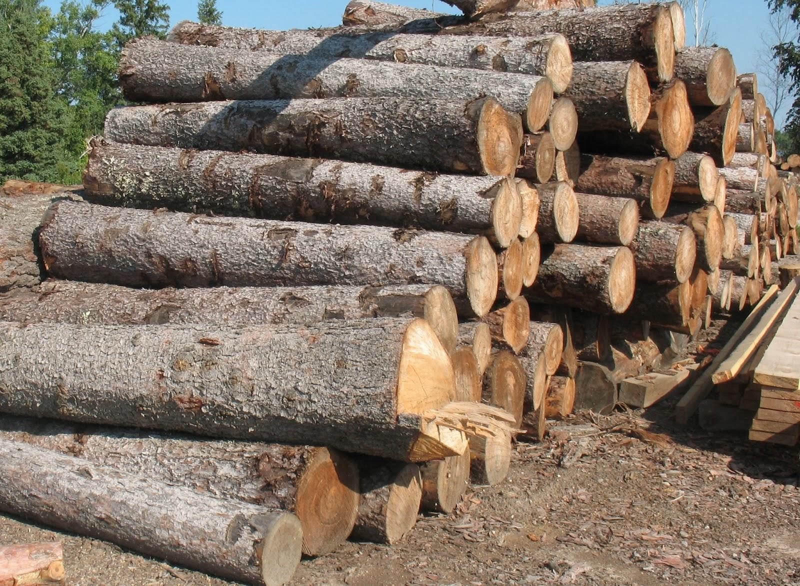 Wille Logging Lumber & Timber: 8' Tamarack