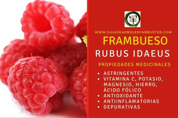 Las propiedades medicinales del frambueso: Astringente, depurativas, antioxidante