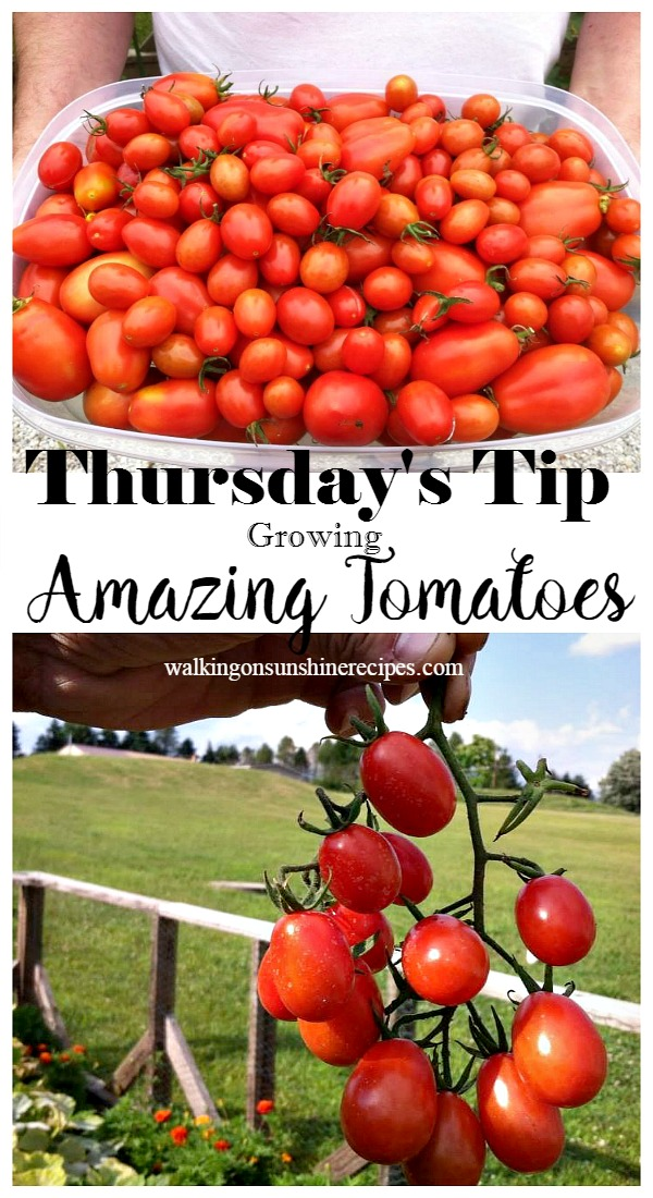 How to Grow Amazing Tomatoes from Walking on Sunshine.