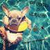 Eu odeio o verão!!! - Projeto Drama Queen #100 ♥ - Por Carol Daixum