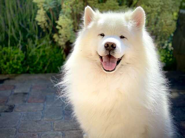 white beautiful puppy images
