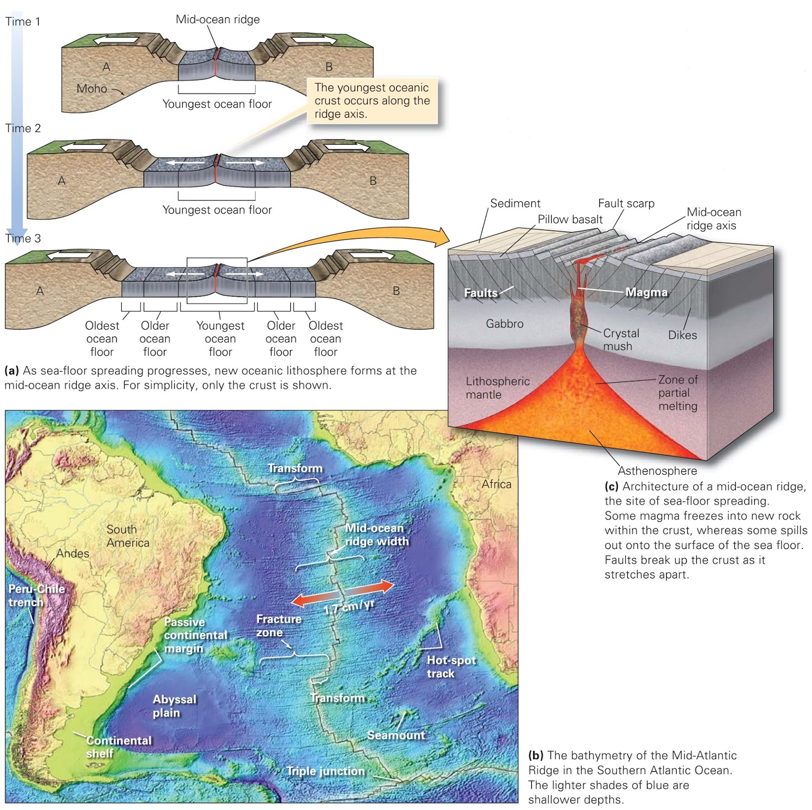 how the sea floor is studied Seafloor spreading, theory that oceanic crust forms along submarine mountain   studies conducted with thermal probes, for example, indicate that the heat flow.