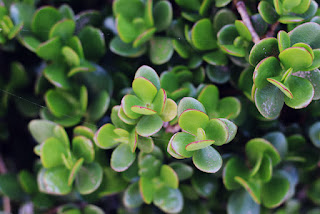 groene plant bewerkt