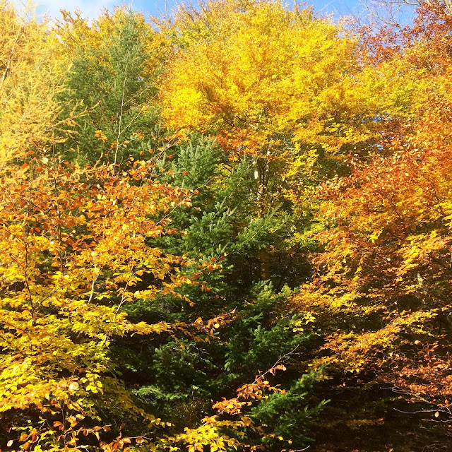 All the Leaves are Brown in Hamsterley Forest