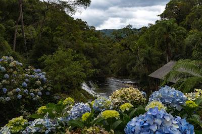 Hydrangeas framing a dreamy location, upper rio dos cedros, brazil beatutiful farm slide waterfall scenery sunset