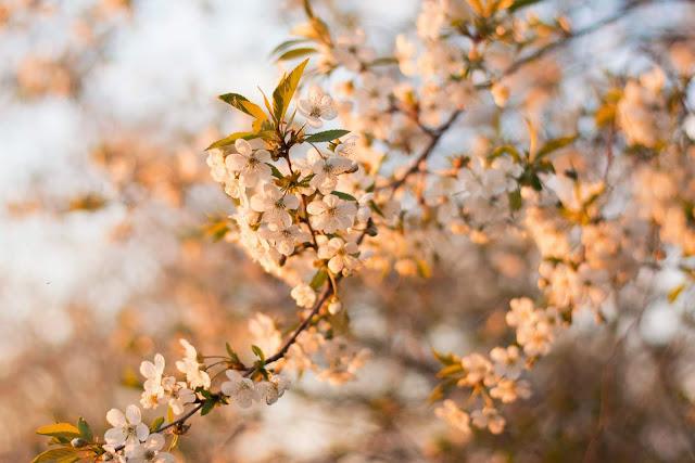 White Flowers During Daytime | Photo by Irina Iriser via Unsplash