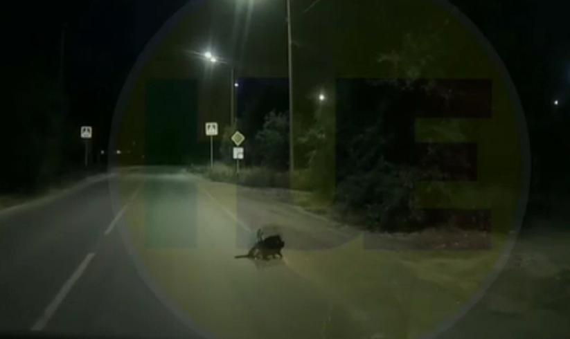 VIDÉO - INSOLITE : Des chats aident un chien qui boite à traverser la chaussée en Russie