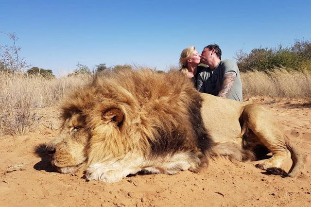 Couple kiss in photo with lion moments after shooting it dead (pics)