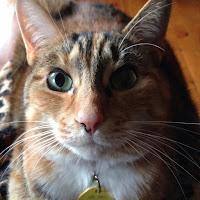 photo of Tica