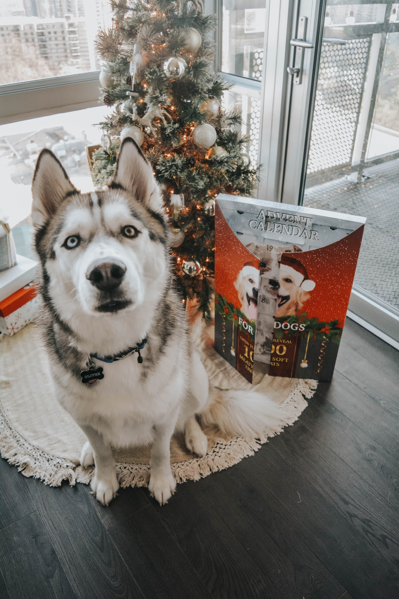 Costco Dog Advent Calendar Review