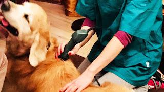 tratamento de cães epiléticos