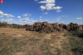 Грушевка. Ляховичский район. Гниющее сено вываленное из гумна
