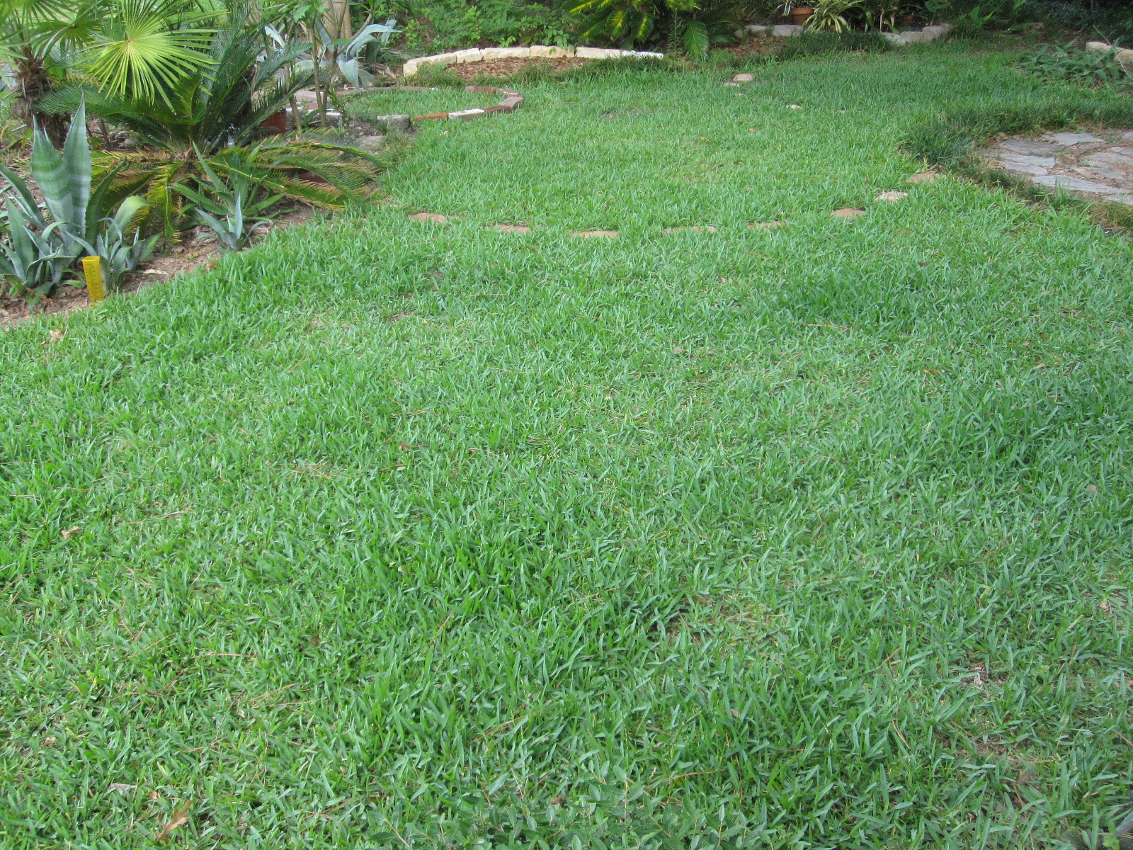 This Is The Lawn One Week After Sprinkling It With 3 Pounds Of Epsom Salts Salt Contains Magnesium And Considered An Organic Soil Amendment By