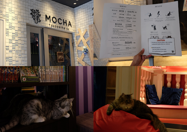 Cat Cafe Mocha Harajuku Tokyo Curitan Aqalili