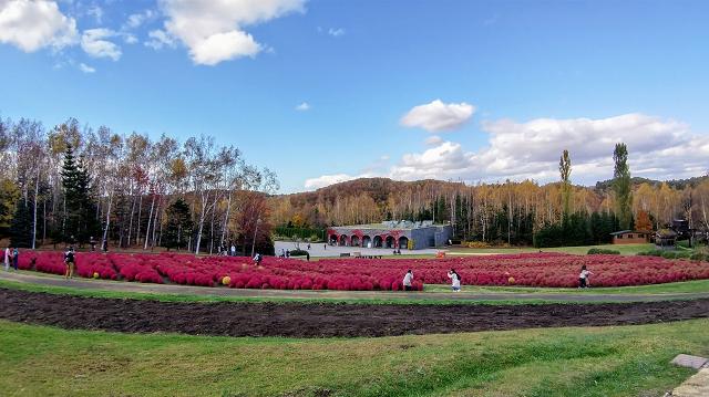 札幌市・滝野すずらん丘陵公園コキア