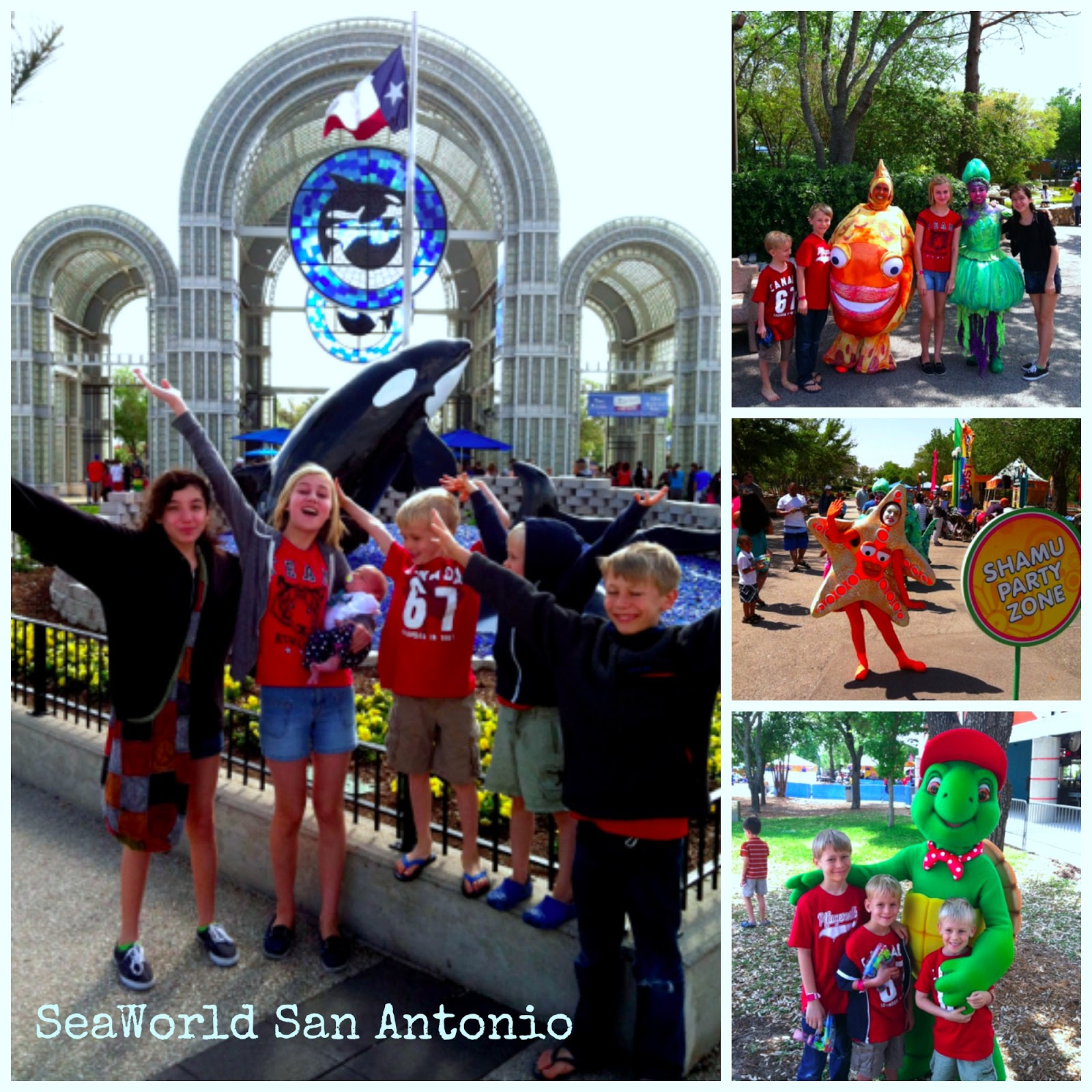 picture regarding Seaworld San Antonio Coupons Printable named 2013 Offers for SeaWorld San Antonio Totally free Pleasurable within just Austin