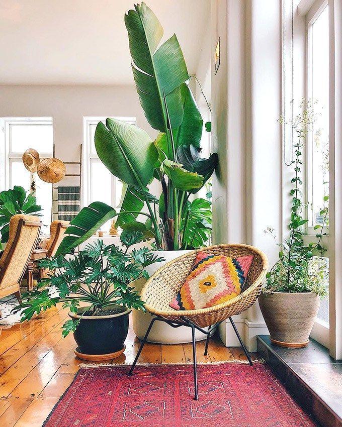 Salones donde las protagonistas son las plantas