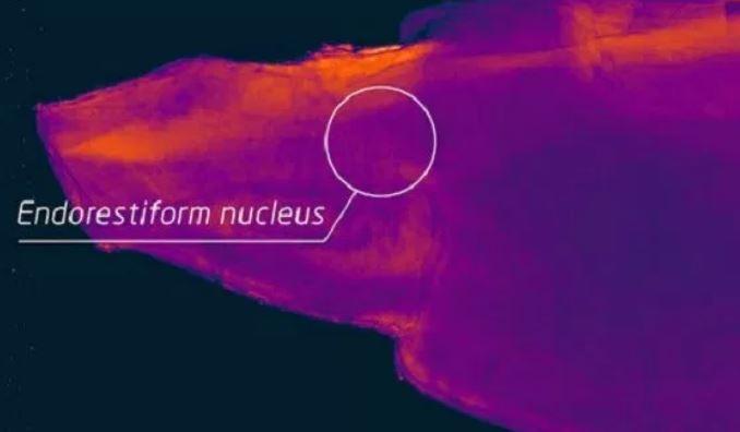 Οι επιστήμονες έχουν βρει ένα μυστηριώδες μέρος του ανθρώπινου εγκεφάλου: Ποια είναι η λειτουργία του;