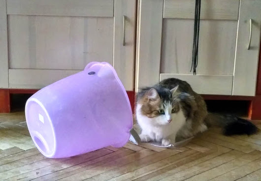 Buy your cat a pink bucket.