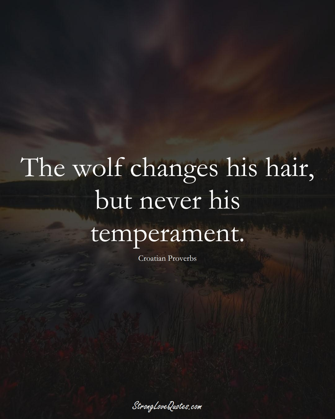 The wolf changes his hair, but never his temperament. (Croatian Sayings);  #EuropeanSayings