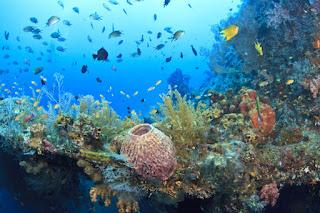 bawah laut lovina bali