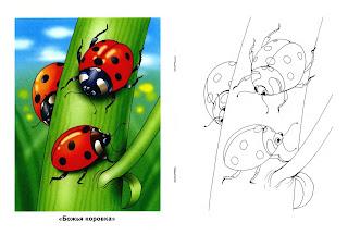 Онлайн раскраски для детей: Насекомые