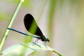 Art Charm Exchange (Bead of Courage): Soar! Dragonflies :: All Pretty Things