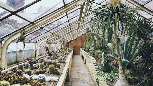 serra-piante grasse