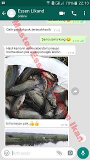 Umpan Serbuk Ikan Nila Harian