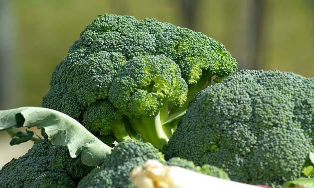 Brócolis (Brassica oleracea L.)